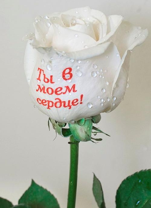 Chicco Go - купить в Москве в интернет магазине, низкая